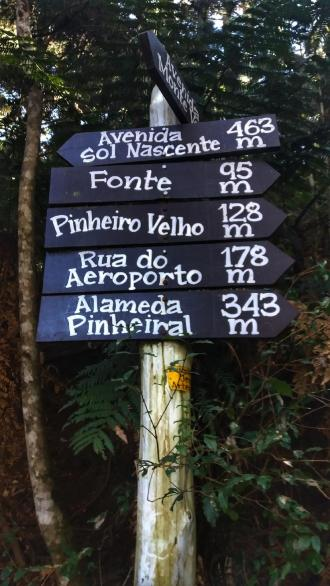 pinheirovelho02
