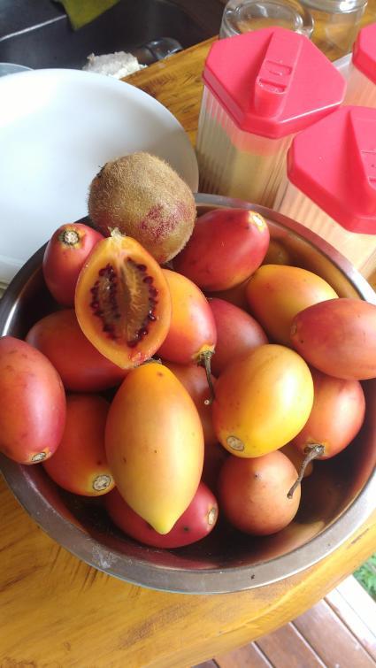 tomatedearvore1